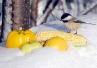 Veggies in a snow