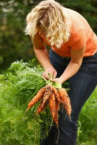 Woman picking carrots